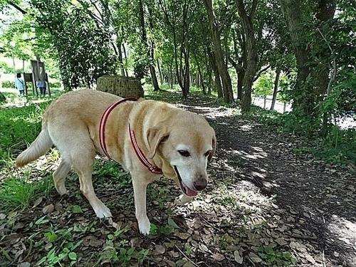 木陰の散歩道